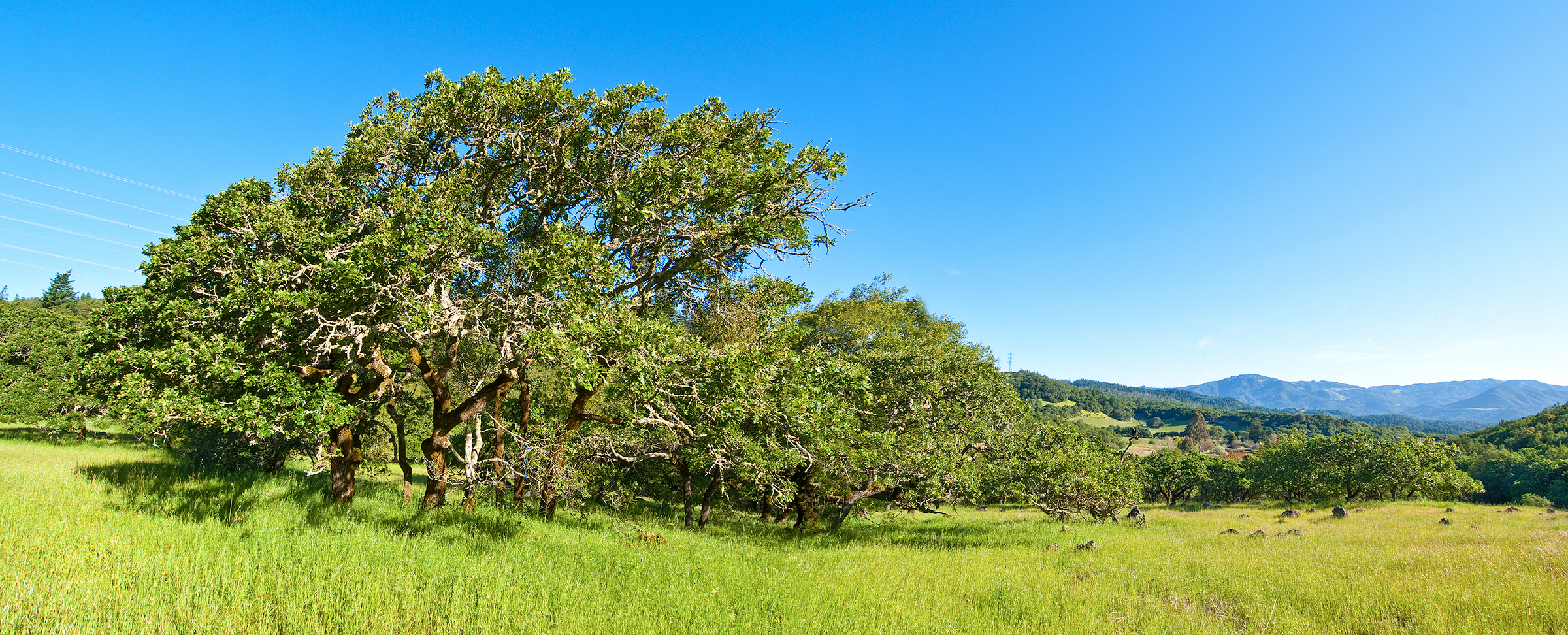 In landmark decision, judge upholds law protecting conservation land in Sonoma County - Sonoma Land Trust