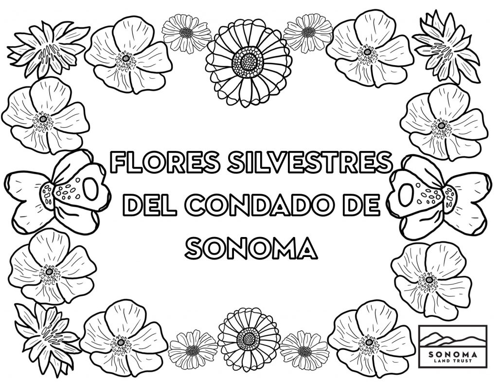 Title page of coloring book spanish